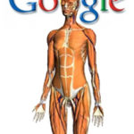 Google to Map the Human Body With Body Browser